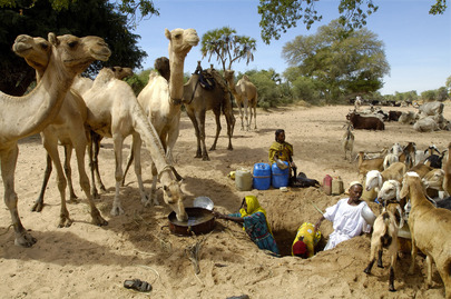 Nomads in Give Camels Water