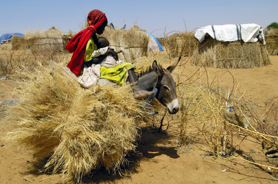 Sudanese IDPs Struggle for Survival