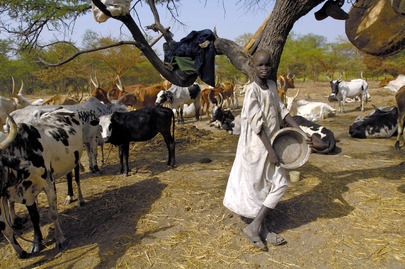 FAO Vaccination Campaign in Sudan