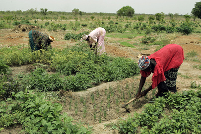 Women Tend to Garden in Senegalese Rural Community