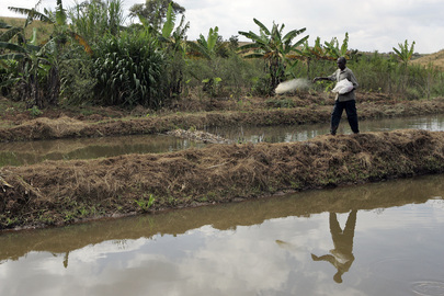 Fish Farming in Tanzania
