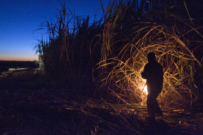 Sugar Cane Employee Burns Field in Brazil
