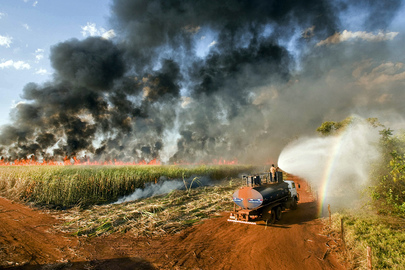 Sugar Cane Field Employee Sprays Water on Burning Sugar Cane