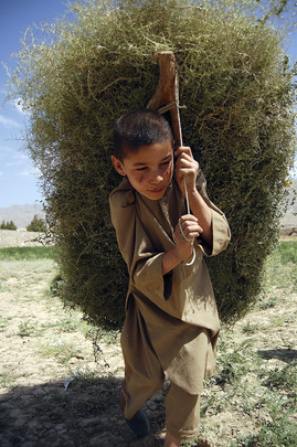 Young Boy Carries Kindling Home
