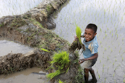 Young Boy Plants Rice