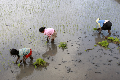 Girls Plant Rice