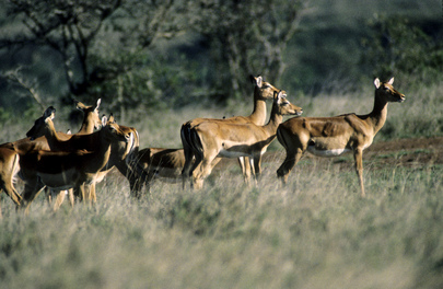 Protecting our Wildlife - A Race against Time