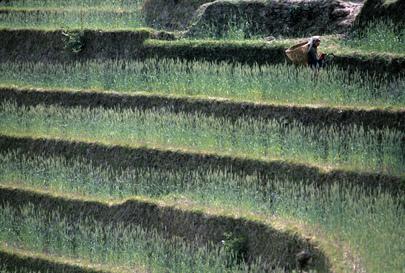 Una mujer corta pasto para alimentar el ganado en Lamaku (Nepal)