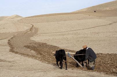An Afghan Farmer Ploughs Field