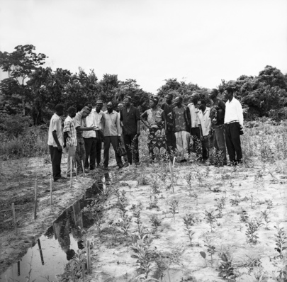 Agricultural Production Project in Democratic Republic of Congo