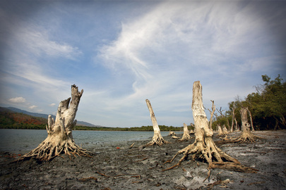 Trees Dead on Shore of Timor-Leste Lake