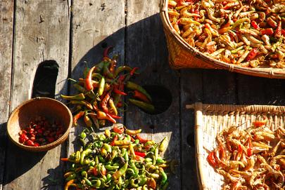 Chili Harvest, Bhutan