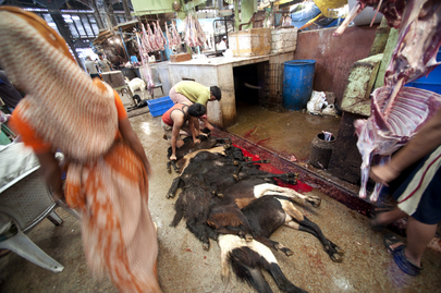 United Nations Photo Slaughterhouse In India