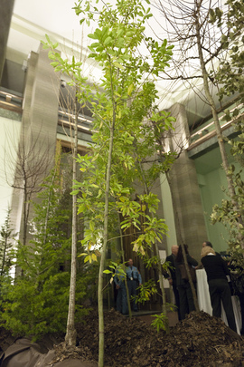 "UN Geneva Office Celebrates Forests Year with ""Art of Trees"""