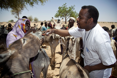 FAO Works in Operation Spring Basket in North Darfur