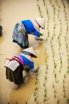 Food and Agriculture: Viet Nam
