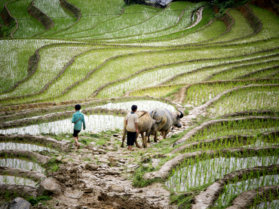 Food and Agriculture in Viet Nam