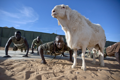 Senegalese Peacekeepers Have Good Luck Charm in Sheep