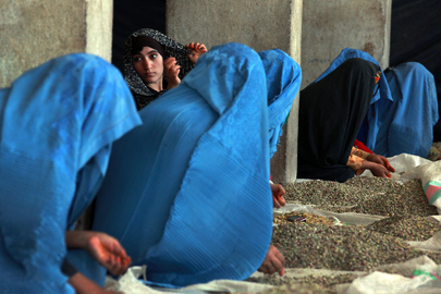 Afghan Women at Work in Pistachio Factory