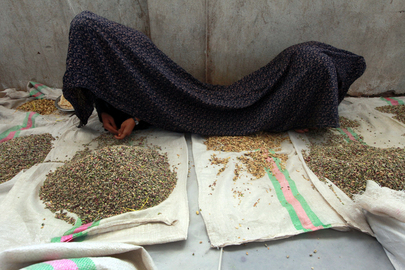 Women at Work in Pistachio Factory, Afghanistan
