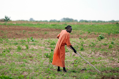 Farming in Volatile Gereida, South Darfur