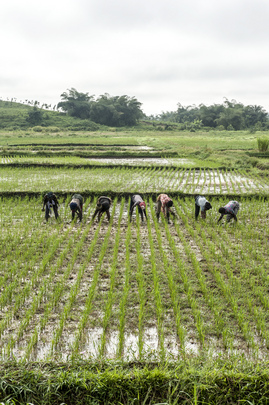 Youth Trained in Farming Practices in Central Liberia