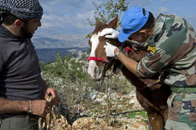 UNIFIL's Indian Contingent Provides Veterinary Care in South Lebanon