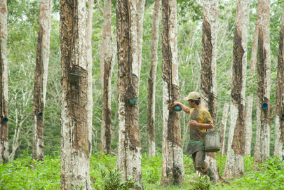 """United Nations Forum on Forests Photo Competition: """"Rubber Farmers"""""""