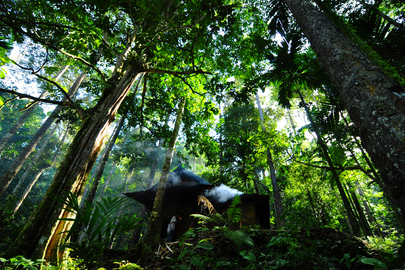 "UN Forum on Forests Photo Competition Winner: ""Pahmung Krui Damar Forest"""