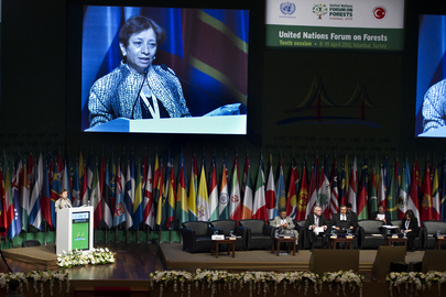 UNFF10: Ministerial Roundtable on Forests and Economic Development