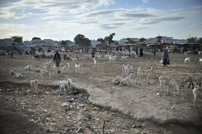 Former Al-Shabaab Stronghold in Mogadishu Now an Animal Market