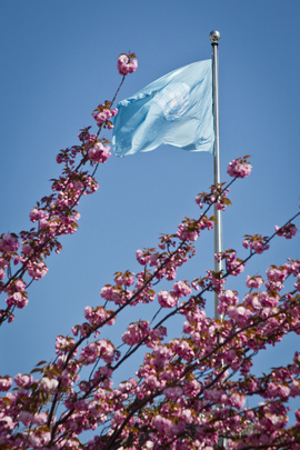 Spring at UN Headquarters