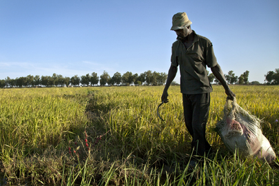 UN Launches Irrigation Project Supporting Mali Farmers