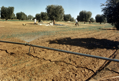 Agricultural Development and Land Use in Libya