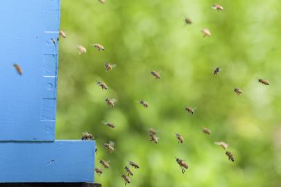 World Bee Day Celebration at UNHQ