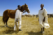 Young Boys Tend Cattle in Sudan 4.4254756