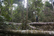 Illegal Logging Effects in National Tapajos Rubber Tree Forest 15.756795