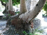 Soil Erosion Destroyed Palm Tree 15.378712