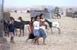 Western Sahara 4.8900957
