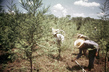 Development of Resources: Reafforestation Project in Paraguay 10.319249