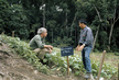 Farming for Development: New Cash Crops to Replace Opium in Thailand 2.5632694