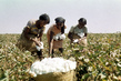 Development of Resources: Growing Cotton in Sudan 0.5586152
