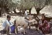 Farming for Development: Animal Raising in Iran 2.631368
