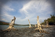 Trees Dead on Shore of Timor-Leste Lake 12.814882