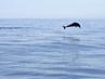 Marine Wildlife off Atauro Island, Timor-Leste 6.836499