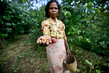 Coffee Pickers in Timor-Leste 16.357056