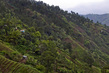 Haiti's Forests 15.765418