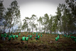 Haitian Students Breathe New Life into Depleted Pine Forest 1.0