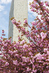 Spring at UN Headquarters 13.062773