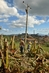 Aftermath of Hurricane Sandy in Cuba 2.3656564